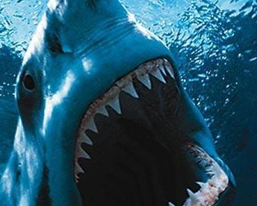Kann man mit einem Weissen Hai wirklich surfen?