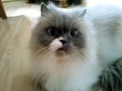 Omas Katze – eine Katzenoma mit Ansprüchen