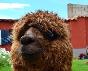 Reiseabenteuer Peru