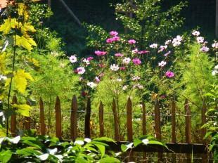 Der Traum vom Wildgarten – das sollten Sie dabei beachten