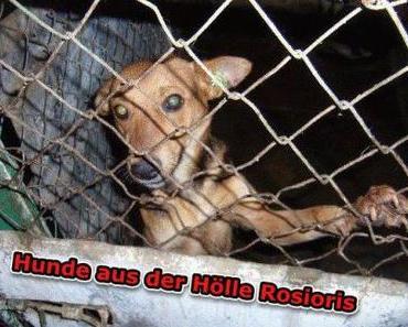 Hunde aus der Hölle Rosioris