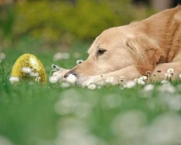 Der Osterhund
