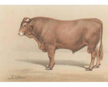 Der Stier leitet das Rückbildungsturnen
