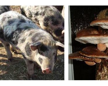 Schweineleasing, Pilz-Impfungen & Co: Selbstversorgung macht unabhängig und glücklich