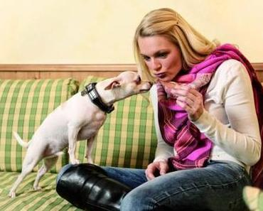 Urlaubszeit ist Hundezeit – auch im Hotel!