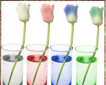 Missglückt: Experiment Blumen färben