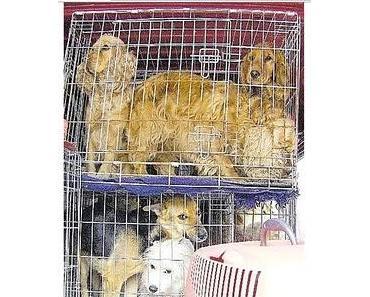 Tierschutzskandal Zarenhof: 6 Thesen für einen Wandel?