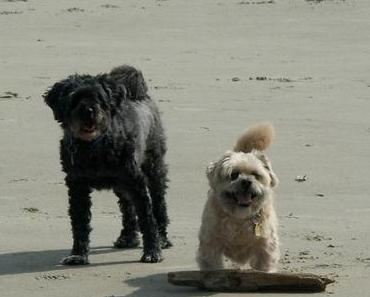 Abschiedsbrief an meine beste Hundegefährtin