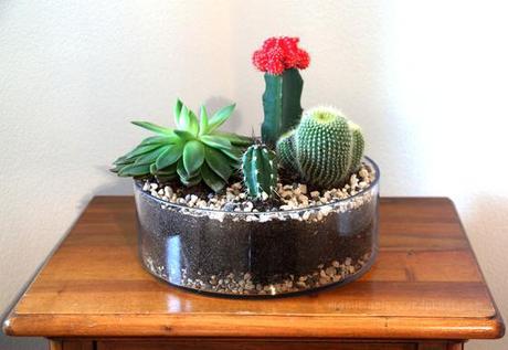 Diy kakteen garten - Kaktus zimmerpflanze ...