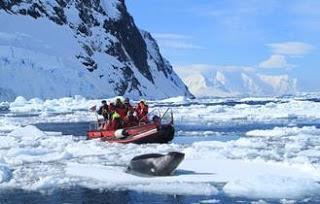 Per Kajak antarktische Gewässer erkunden - Hurtigruten Expeditions-Seereisen mit neuen Ausflügen in der Antarktis