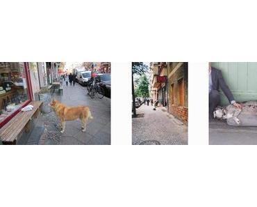 Crowd-Funding für Wartende Hunde. Ein Buch über die Treue
