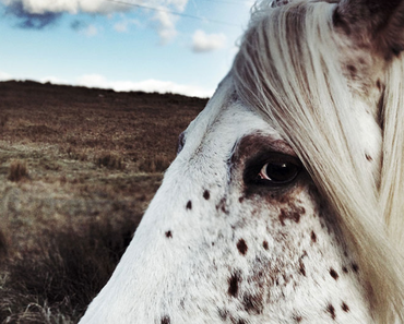 iPhone Photography Awards 2013: Die besten Bilder