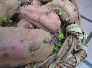 Kartoffeln sind eine rundum gesunde Sache