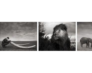 Berlinspiriert Kunst: Nick Brandt – Across the Ravaged Land