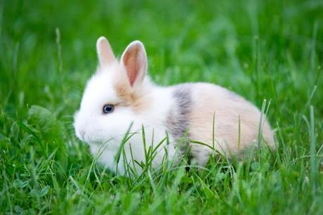 Baby Rabbit - blue Eyes