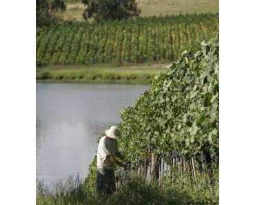Weinbau in Brasilien – brasilianscher Wein