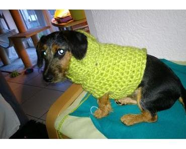 Hundepullover – selbst gehäkelt