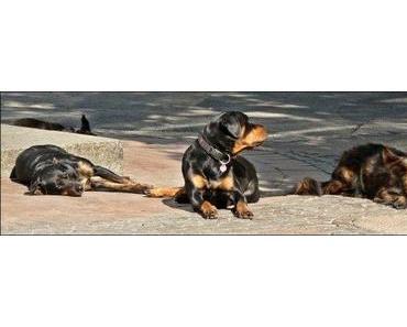 Hundefutter Produktproben kostenlos erhalten