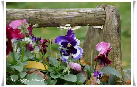 Der Garten im November....