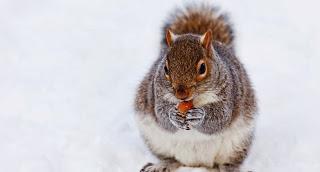 Finanzen: Wenn der Pleitegeier kreist - oder mühsam ernährt sich das Eichhörnchen