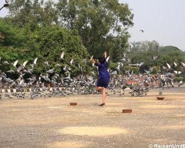 Fliegende Tauben, Rotes Fort und Old Delhi