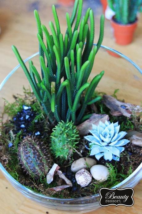 Diy geschenke terrarium for Kieselsteine baumarkt