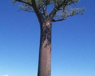 Zwei Diepoldsauer in Madagaskar