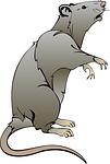 Werden Sie doch Rattenfänger !  Ein Job für echte Allrounder !
