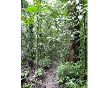 Barro Colorado Island – künstliches Naturparadies inmitten des Panama-Kanals