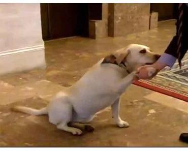 Berlin verlangt Bettensteuer auch für Hunde im Hotel