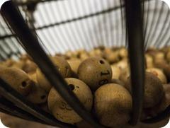 Lotto spielen: die Chance auf das große Geld