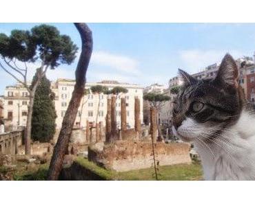 Rom: wilde Katzen und schnelle Nonnen