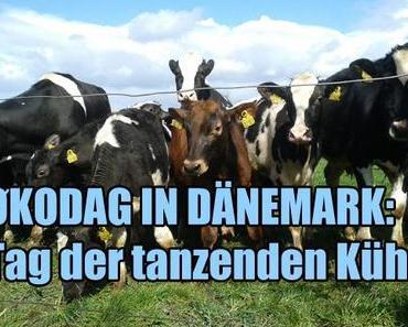 """""""Økodag"""": Tag der tanzenden Kuh in Dänemark"""