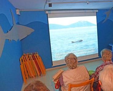 Delphine treffen auf der Insel Lošinj in Kroatien
