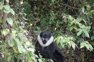 Rwanda. Speciality Coffee Trek (Teil 5)