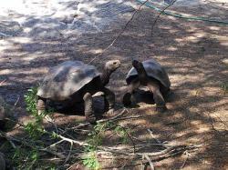 Monatsthema Juni 2014: Tiere auf den Galapagosinseln