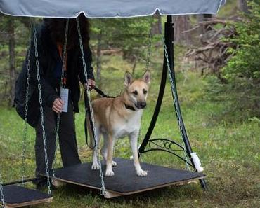 Hunde Military – knifflige Aufgaben Hund und Halter