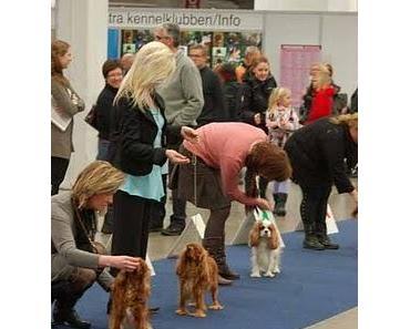 Veranstaltungen der Hundemesse MyDog in Göteborg