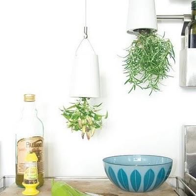 mir gefallen diese h ngenden pflanzen eifach super und g. Black Bedroom Furniture Sets. Home Design Ideas