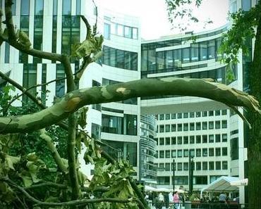 Düsseldorf | Hofgarten – die Ruhe nach dem Sturm