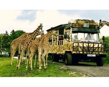 Ausflug in die Serengeti