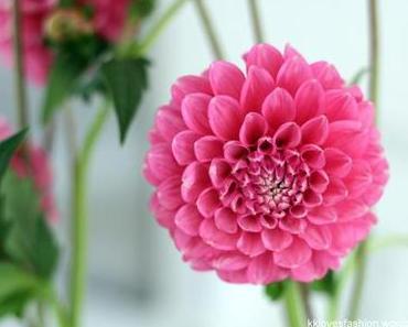 Was Schönes zum Anschauen: Blühende Deko für Daheim
