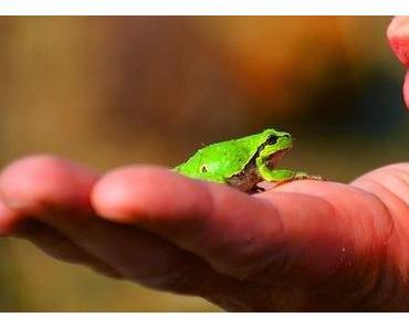 Was sind grüne Berufe ? Vom Stoppelhopser bis zum Winzer ,,,