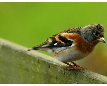 Das richtige Futter – Vögel brauchen unsere Hilfe
