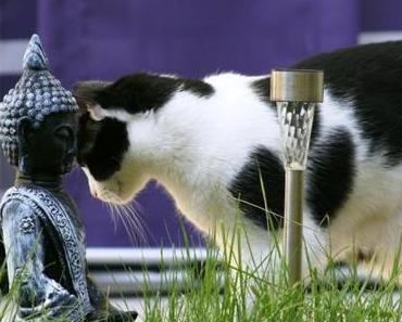 Fellknäuel im Garten – Fotostrecke Katzen