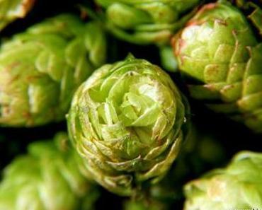 Hopfen und Malz – Bier in der Literatur