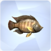 Tilapia in The Sims 4