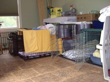 Hundecamp im Pet Room