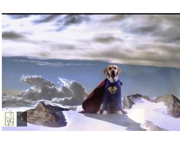 Aktion: Heldenhunde
