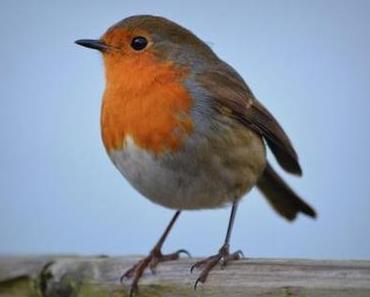 Die Vogelstimmen-App